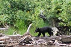 L'un des oursons