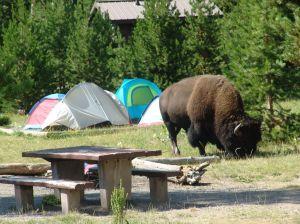 madison-campground-1024x768
